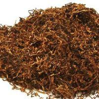 TÜTÜN (Nicotiana tabacum)