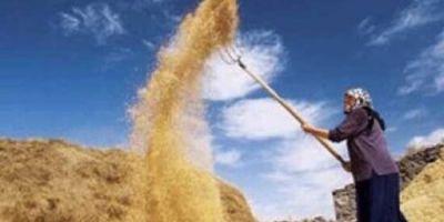 Sigortası olmayan çiftçiye kuraklık primi önerisi