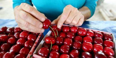Afyonkarahisar'dan Çin'e Kiraz İhraç Edilmesinin Önü Açıldı