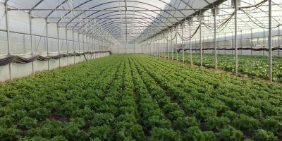 Antalya'da Biyolojik Mücadelede 3 Kat Artış Sağlandı