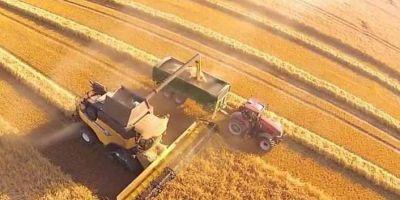 Buğday Ekim Alanı Daraldı Açık Rekolte Artışıyla Telafi Edilecek!