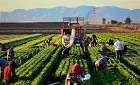 Çiftçi kuruluşlarına Devlet Denetleme Kurulu denetimi geliyor!