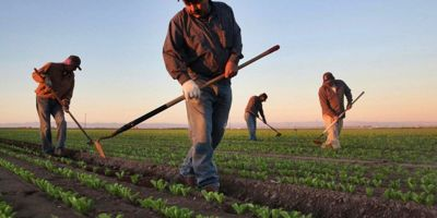 Çin Ve ABD'nin Çekişmesi Türk Çiftçisine Yarayacak