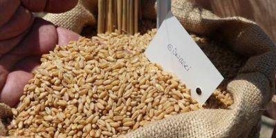 Doğu Akdeniz Tarımsal Araştırma Enstitüsünden 3 Yeni Buğday Çeşidi