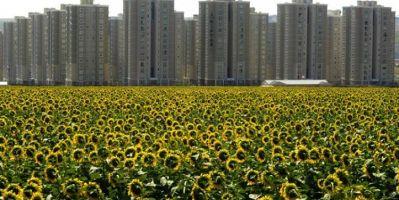 FAO, Entegre Arazi Kullanım Planlaması'nı Türkiye'de Başlatıyor