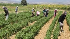 Mevsimlik tarım işçileri için örnek proje: Yaşam köyü oluşturulacak