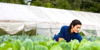 Muğla'da 206 Genç Çiftçiye 6 Milyon 180 Bin Lira Hibe