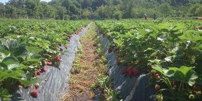 Tarım Bakanı o üründeki kazancı açıkladı: 10 dekar eken 200 bin lira kazanıyor