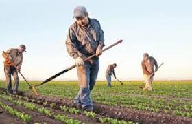 Tarım Bakanlığı üretimi canlı tutmak için sahaya iniyor