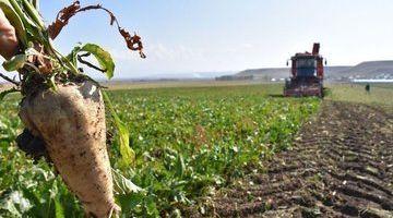 Tarım İl Müdüründen çarpıcı şeker pancarı üretim rakamları: Üretim 15 yılda 6.5 kat azaldı!