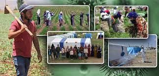 Tarım işçilerine bunu layık gördüler: Yemeksiz 52 lira yevmiye!