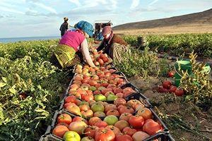 Tarım Ürünleri İhracatına Tarım OSB Dopingi