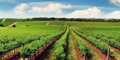 Tarımda Milli Birlik Projesinin Değerlendirme Şurası Yapılacak