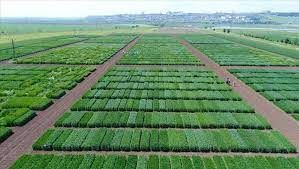 Tarımsal destek programında 17'nci proje çağrısı yapıldı! 30 milyon lira destek verilecek!