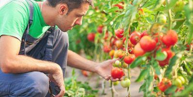 Tarımsal Yayım Ve Danışmanlık Sınavı Başvuruları Başladı