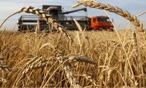 Ulusal Hububat Konseyi: Çiftçiyi buğday üretimine teşvik için prim desteği artırılmalı